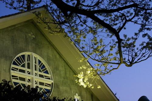 成城教会の桜 2007