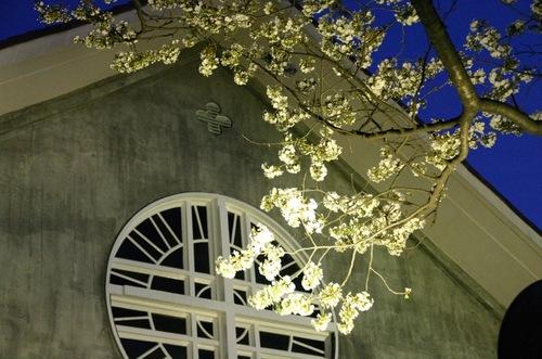 成城教会の桜 2008