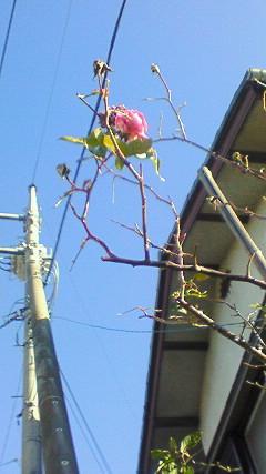 春の予感〜I've been mellow<br /> 〜