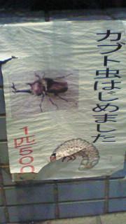かぶと虫はじめました。