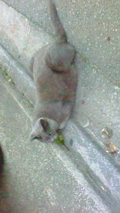 ねずみ色の猫