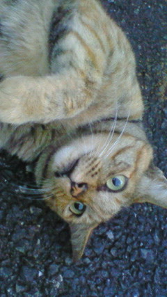 近所の猫と